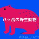 八ヶ岳の野生動物