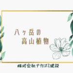 八ヶ岳の高山植物
